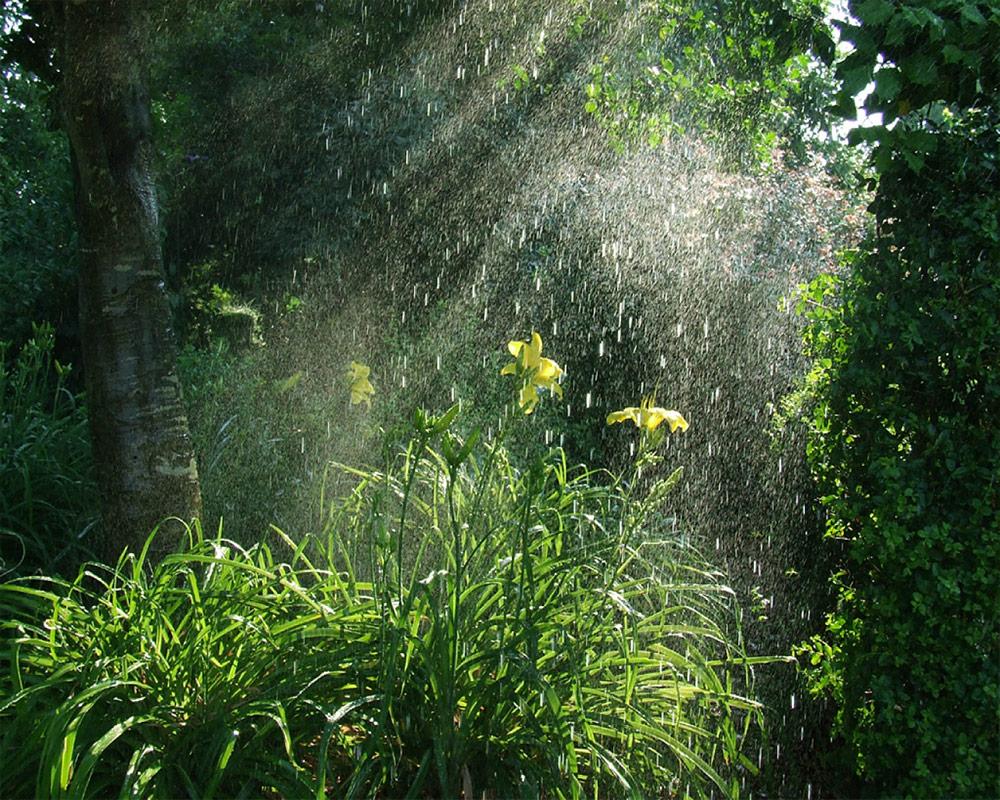صدای باران در جنگل