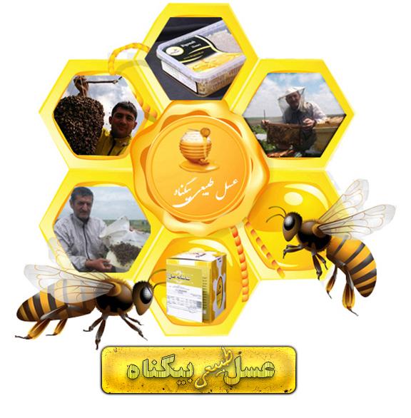 albm honey1