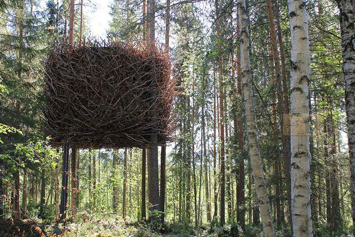 ساختن خانه درختی با شاخه ها