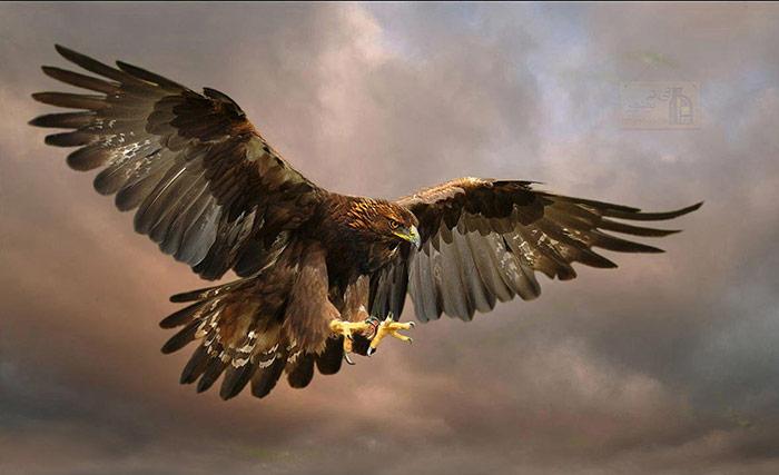 itbushehr.gold .eagle 7